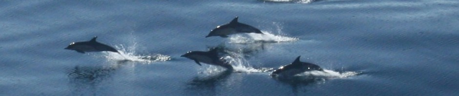 cropped-dolphins.jpg