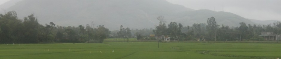 Paddy field 3