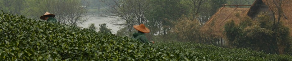 A swift flies among the tea leaves